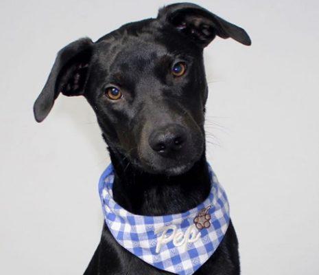 Halstücher für Hunde