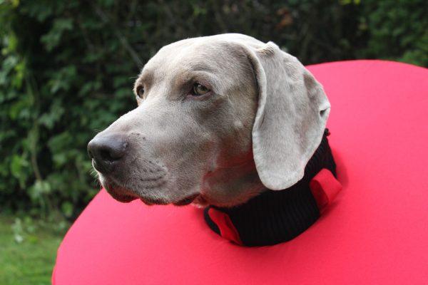 Hunde Leckschutzkragen